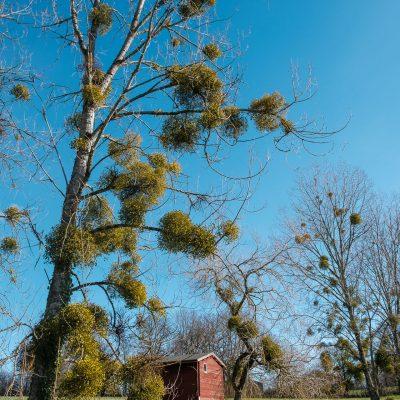 arbres_portrait